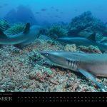 Underwater Media Tauch Kalender 2018 - September