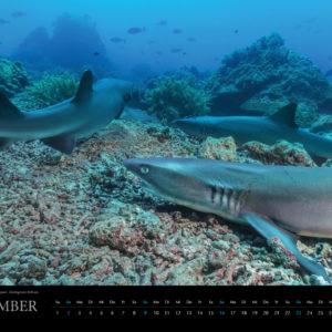 2018 Underwater Calendar 70x50cm September