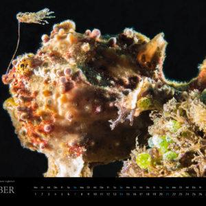 2018 Underwater Calendar 70x50cm October