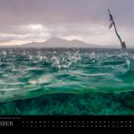 Underwater Media Tauch Kalender 2018 - Dezember