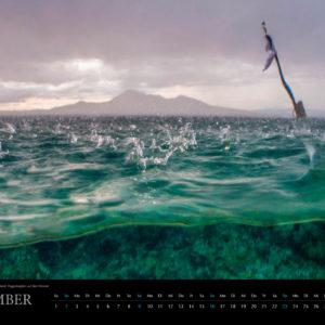 2018 Underwater Calendar 70x50cm December