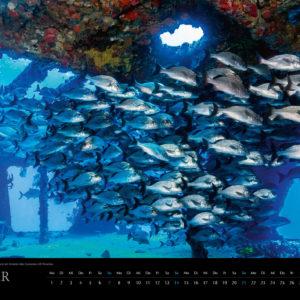 2018 Underwater Calendar 70x50cm January