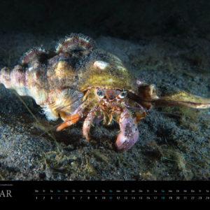 2018 Underwater Calendar 70x50cm February