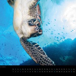 2018 Underwater Calendar 70x50cm March