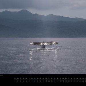 2018 Underwater Calendar 70x50cm April