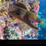 Underwater Media Tauch Kalender 2018 - Mai