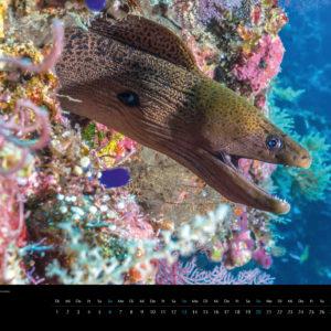 2018 Underwater Calendar 70x50cm May