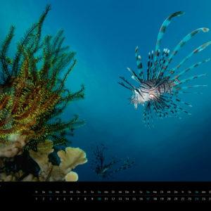2018 Underwater Calendar 70x50cm June