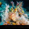 Underwater Media Tauch Kalender 2018 - Juli