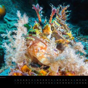 2018 Underwater Calendar 70x50cm July