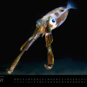 2018 Underwater Calendar 70x50cm August
